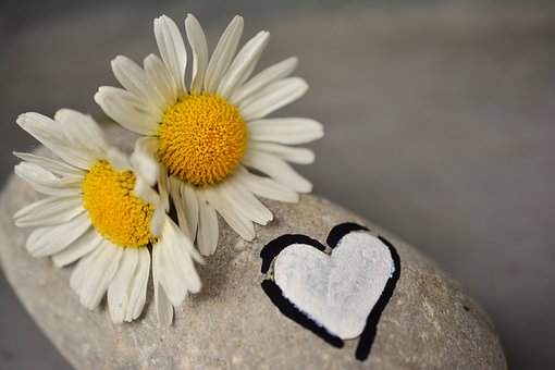 daisies-2357264__340